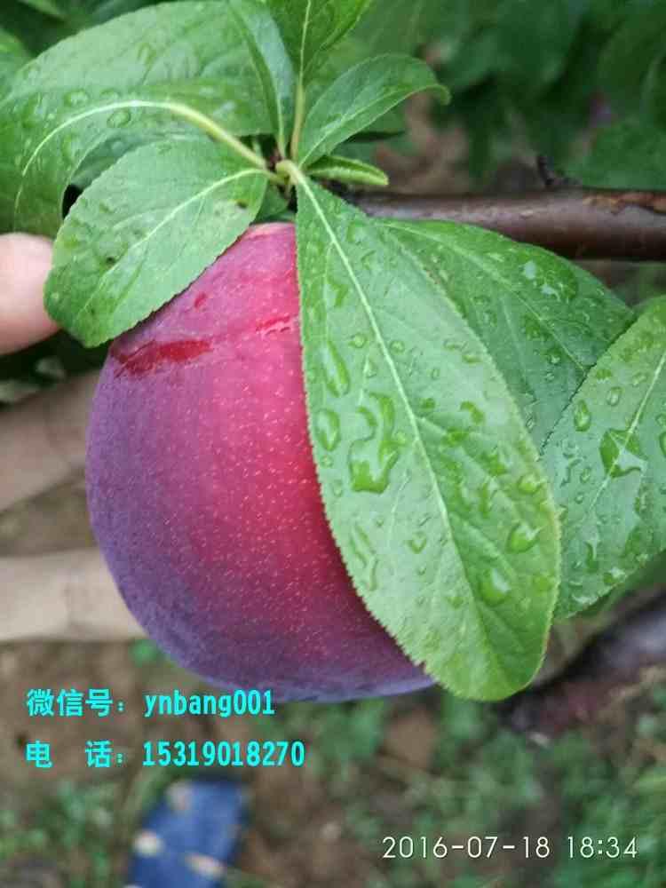 做水果微商如何找到一手货源?